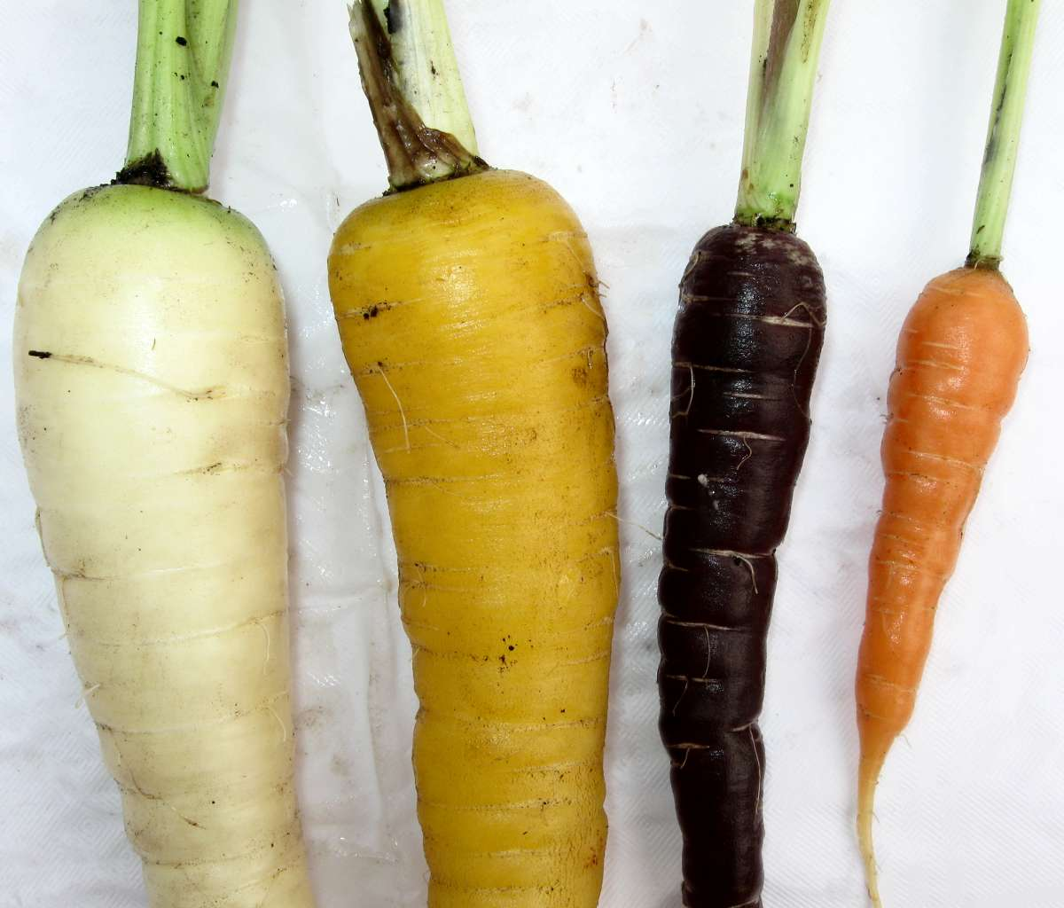 carrot colours, colors