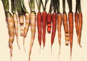 Different types of coloured carrots