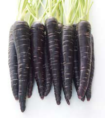 Black Knight Carrot Nunhems