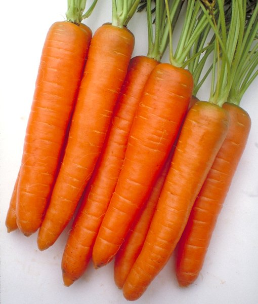 Inca carrot Nunhems
