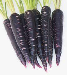 Indigo Carrot Nunhems