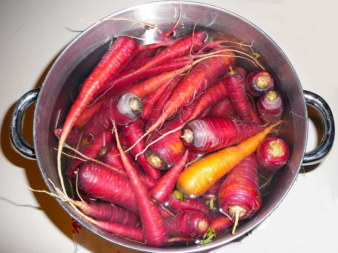 purple maroon carrots