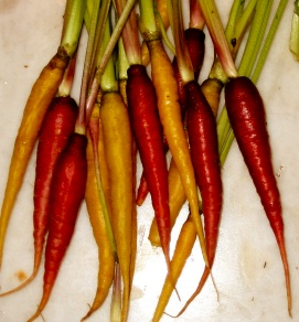 colored carrots purple yellow