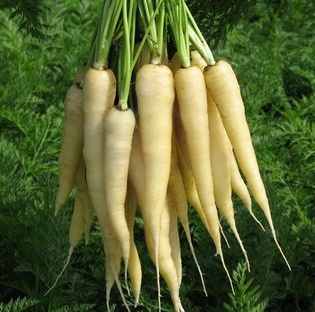 White Satin Carrots