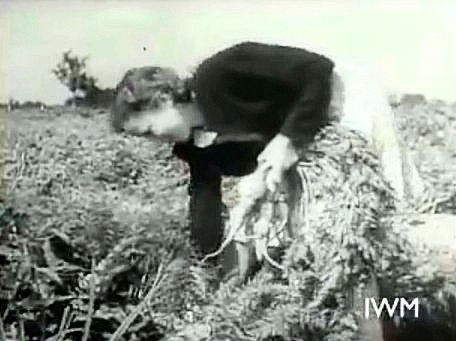 ww2 cropping carrots